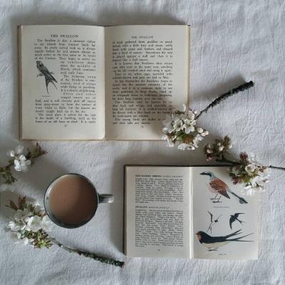 Aesthetic-birds-book-books-Favim.com-4351488